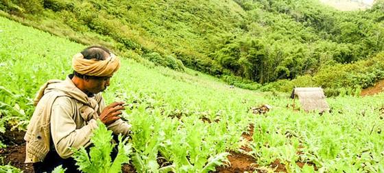 Thảm họa ma túy đá - Kỳ 1: Tràn lan khắp châu Á ảnh 1