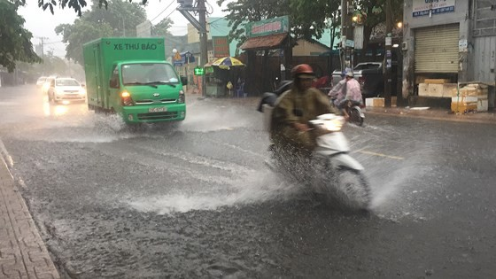 TPHCM mưa lớn, cây xanh bật gốc ngã đè người đi đường tử vong ảnh 12