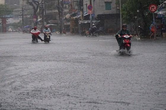 TPHCM mưa lớn, cây xanh bật gốc ngã đè người đi đường tử vong ảnh 10