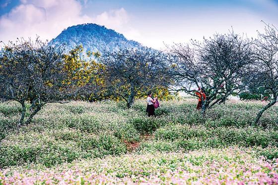 Mộc Châu vào mùa  đẹp nhất ảnh 3