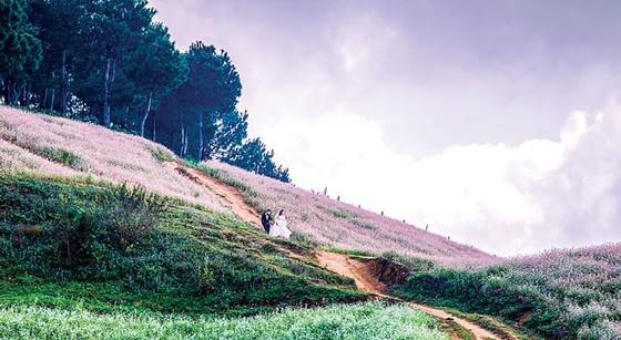 Mộc Châu vào mùa  đẹp nhất ảnh 4