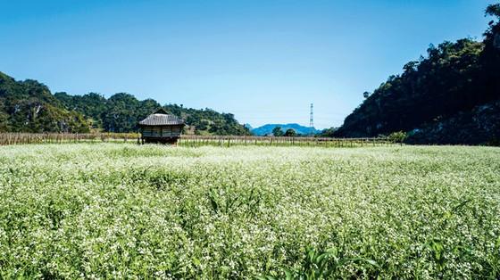 Mộc Châu vào mùa  đẹp nhất ảnh 9