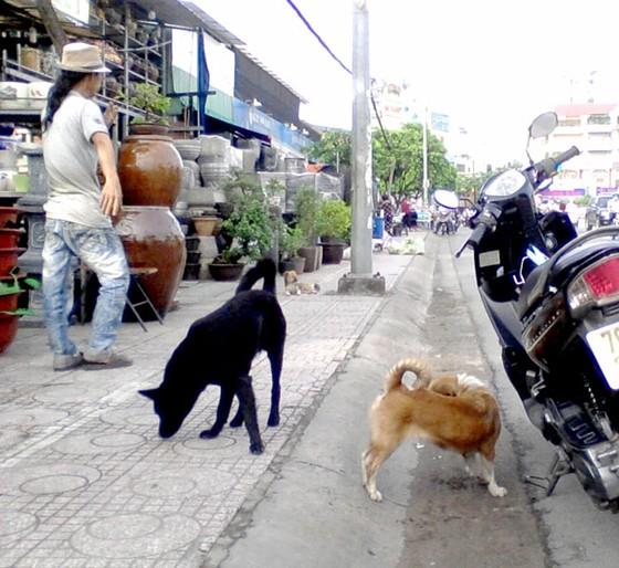 Quản lý chặt việc nuôi súc vật ảnh 1