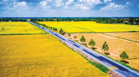 Con đường lúa gạo miệt Ngàn ảnh 1