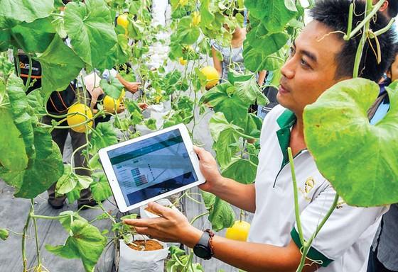 Nông nghiệp công nghệ cao vẫn còn thấp ảnh 1