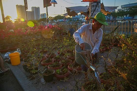 Chợ hoa xuân trên bến dưới thuyền… ảnh 4