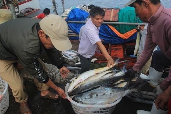 Ngư dân Quảng Trị trúng mẻ cá 7 tỷ đồng ảnh 1