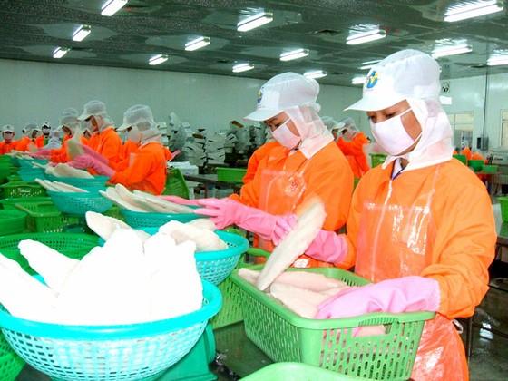 Xuất khẩu cá tra hướng tới mục tiêu 2,4 tỷ USD ảnh 1