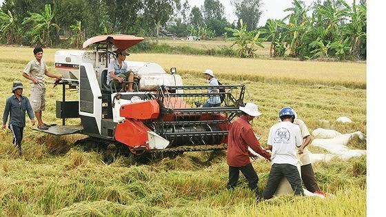 Thủ tướng yêu cầu mua sớm 200.000 tấn gạo dự trữ ảnh 2