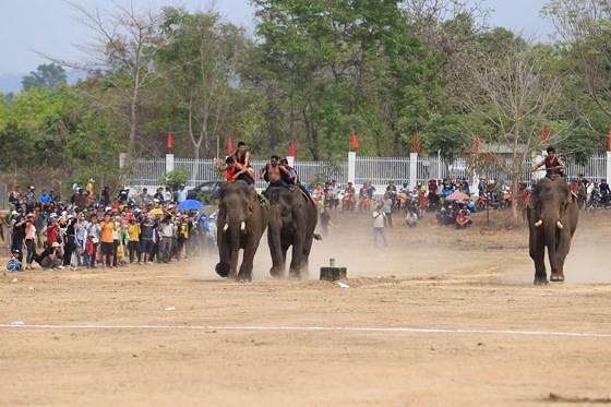 Đến xứ voi xem voi đá bóng ảnh 8