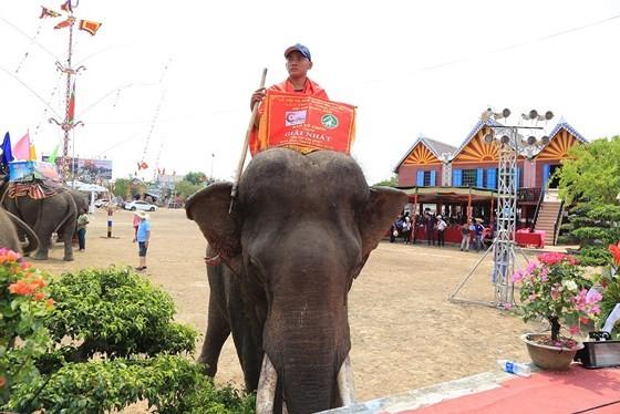 Đến xứ voi xem voi đá bóng ảnh 14