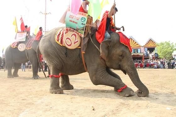 Đến xứ voi xem voi đá bóng ảnh 1