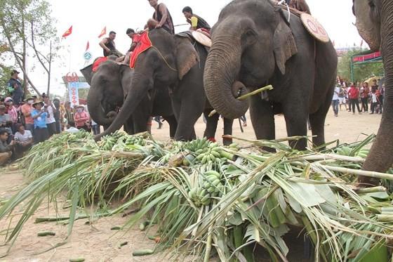 Đến xứ voi xem voi đá bóng ảnh 11