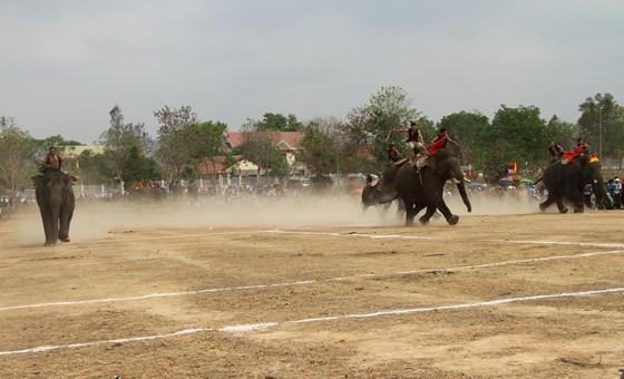 Đến xứ voi xem voi đá bóng ảnh 3