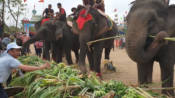 Đến xứ voi xem voi đá bóng ảnh 10