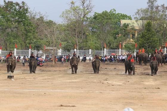Đến xứ voi xem voi đá bóng ảnh 7