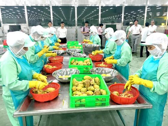 Thay đổi để xuất khẩu ổn định sang Trung Quốc ảnh 1