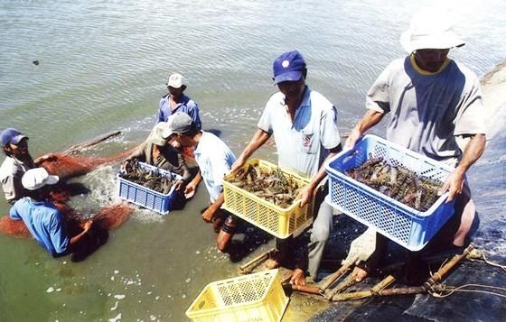 Xuất khẩu thủy sản: Hướng tới mục tiêu 10 tỷ USD ảnh 1