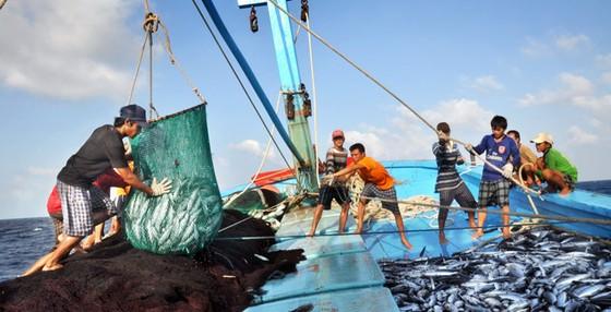 Kinh tế thuần biển đóng góp 10% GDP ảnh 1