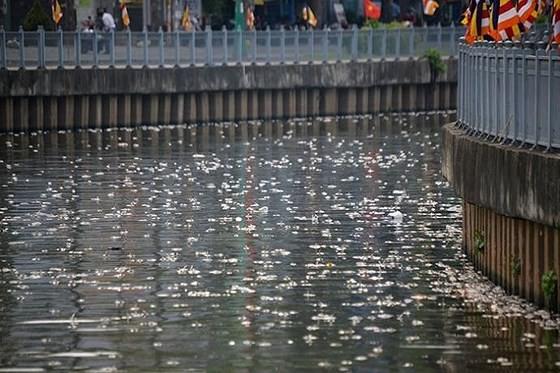 Cải thiện nguồn nước nhằm hạn chế cá chết trên kênh Nhiêu Lộc - Thị Nghè ảnh 1