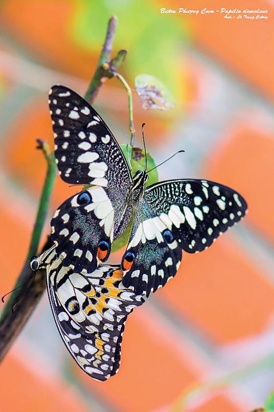 Doanh nhân mê… bướm ảnh 2