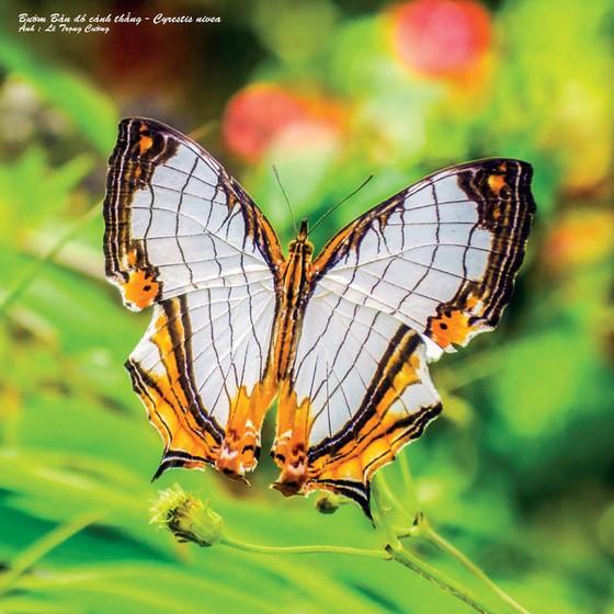 Doanh nhân mê… bướm ảnh 3