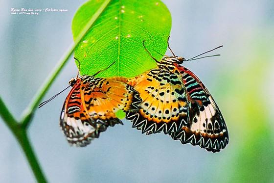 Doanh nhân mê… bướm ảnh 4
