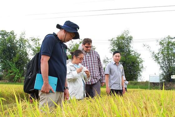Xuất khẩu gạo -Tìm thị trường mới ảnh 1