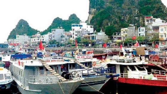 Tàu thuyền ở Quảng Ninh neo đậu tránh bão