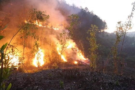 Cây lương thực khô cháy, chết dần vì hạn hán kéo dài ở khu vực Trung Trung bộ ảnh 2