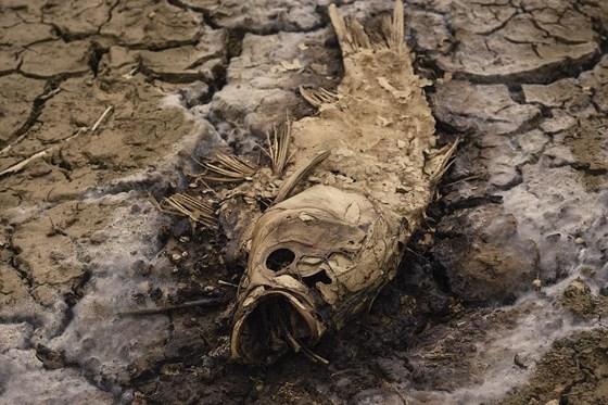 Cây lương thực khô cháy, chết dần vì hạn hán kéo dài ở khu vực Trung Trung bộ ảnh 7