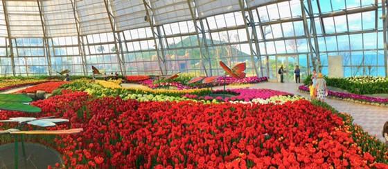 Lễ hội Tulip lớn nhất Việt Nam tại Vinpearl Nha Trang  ảnh 3