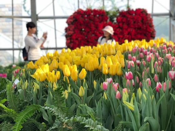 Lễ hội Tulip lớn nhất Việt Nam tại Vinpearl Nha Trang  ảnh 4
