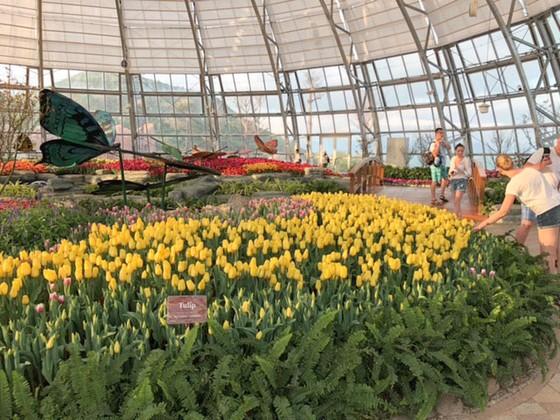 Lễ hội Tulip lớn nhất Việt Nam tại Vinpearl Nha Trang  ảnh 5