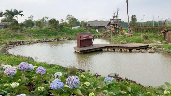 Mê hoặc đảo hoa hồng ven đê sông Hồng  ảnh 3