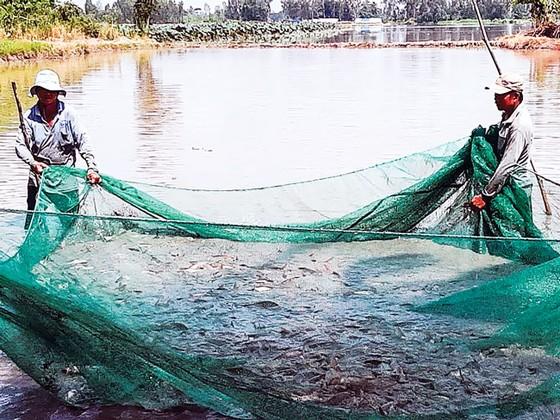 Mùa cá ra sông ảnh 1
