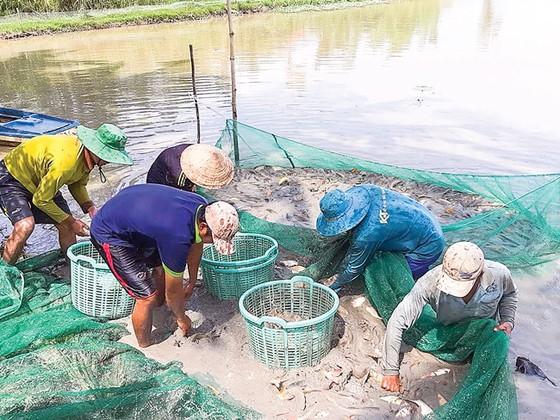Mùa cá ra sông ảnh 2