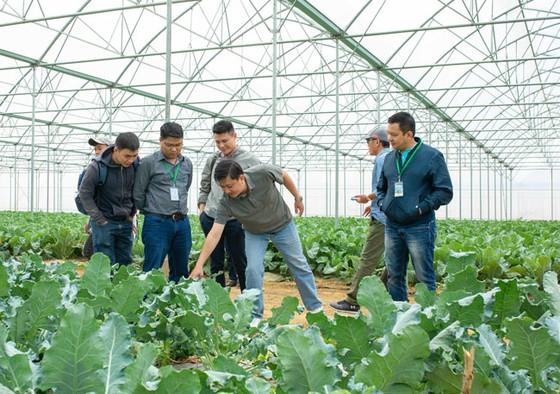 VinEco hợp tác 800 hộ nông dân sản xuất nông sản sạch ảnh 1