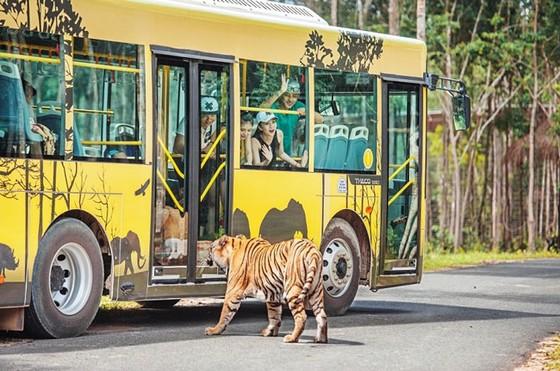 """Vinpearl Safari Phú Quốc: Trải nghiệm """"Tết mới"""", gắn kết thiên nhiên  ảnh 9"""