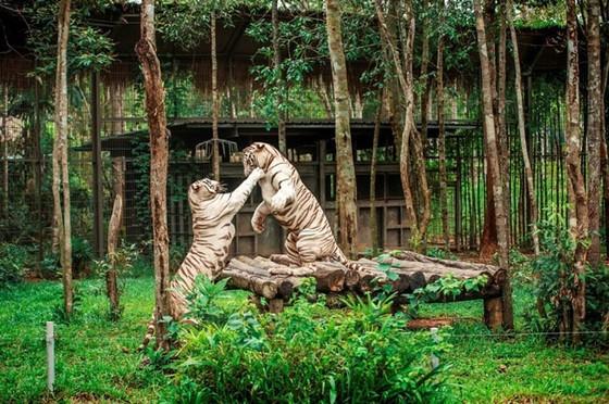 """Vinpearl Safari Phú Quốc: Trải nghiệm """"Tết mới"""", gắn kết thiên nhiên  ảnh 11"""