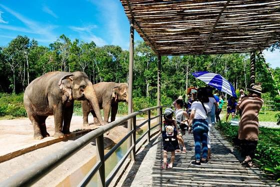 """Vinpearl Safari Phú Quốc: Trải nghiệm """"Tết mới"""", gắn kết thiên nhiên  ảnh 14"""