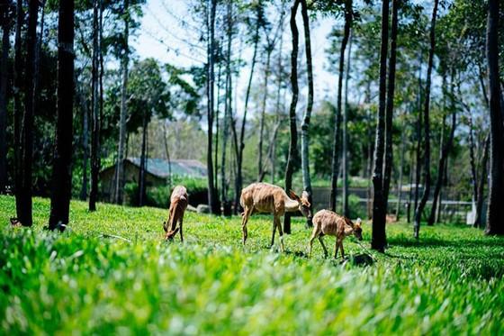 """Vinpearl Safari Phú Quốc: Trải nghiệm """"Tết mới"""", gắn kết thiên nhiên  ảnh 1"""