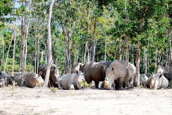 """Vinpearl Safari Phú Quốc: Trải nghiệm """"Tết mới"""", gắn kết thiên nhiên  ảnh 4"""