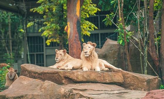 """Vinpearl Safari Phú Quốc: Trải nghiệm """"Tết mới"""", gắn kết thiên nhiên  ảnh 5"""