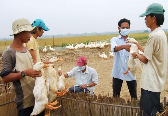 Ngành chăn nuôi - Nhiều cơ hội việc làm ảnh 1