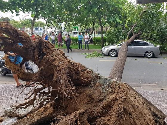 Gió lớn, cây ngã, nhà tốc mái, nhiều người bị thương ảnh 11