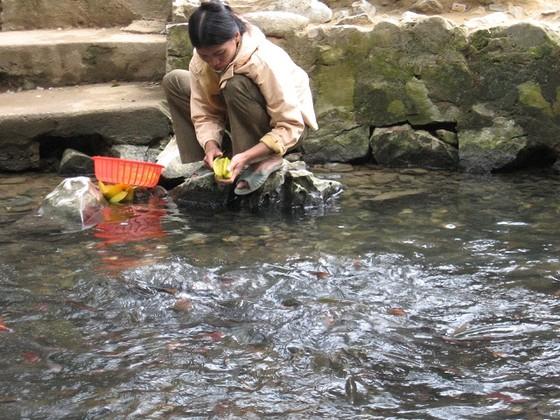 Những giai thoại bí ẩn về suối cá thần Cẩm Lương nổi tiếng ảnh 7