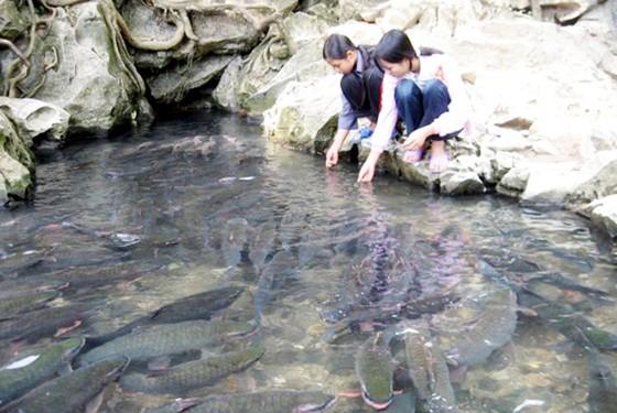 Những giai thoại bí ẩn về suối cá thần Cẩm Lương nổi tiếng ảnh 4