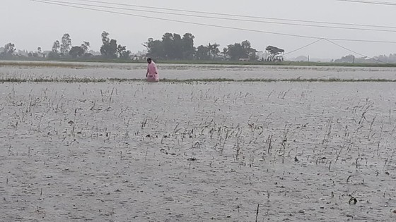 Nhiều nơi tại Nghệ An ngập lụt, có thể lùi thời gian khai giảng năm học ảnh 4