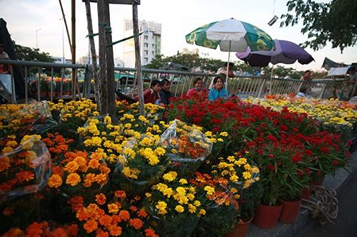 Chợ hoa xuân trên bến dưới thuyền… ảnh 5
